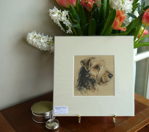 Coloured terrier head , Welsh terrier 1930's print by Lucy Dawson